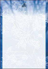 weihnachtsbriefpapier schneestrauch mit tannenbaum a4. Black Bedroom Furniture Sets. Home Design Ideas